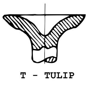 T - Tulip
